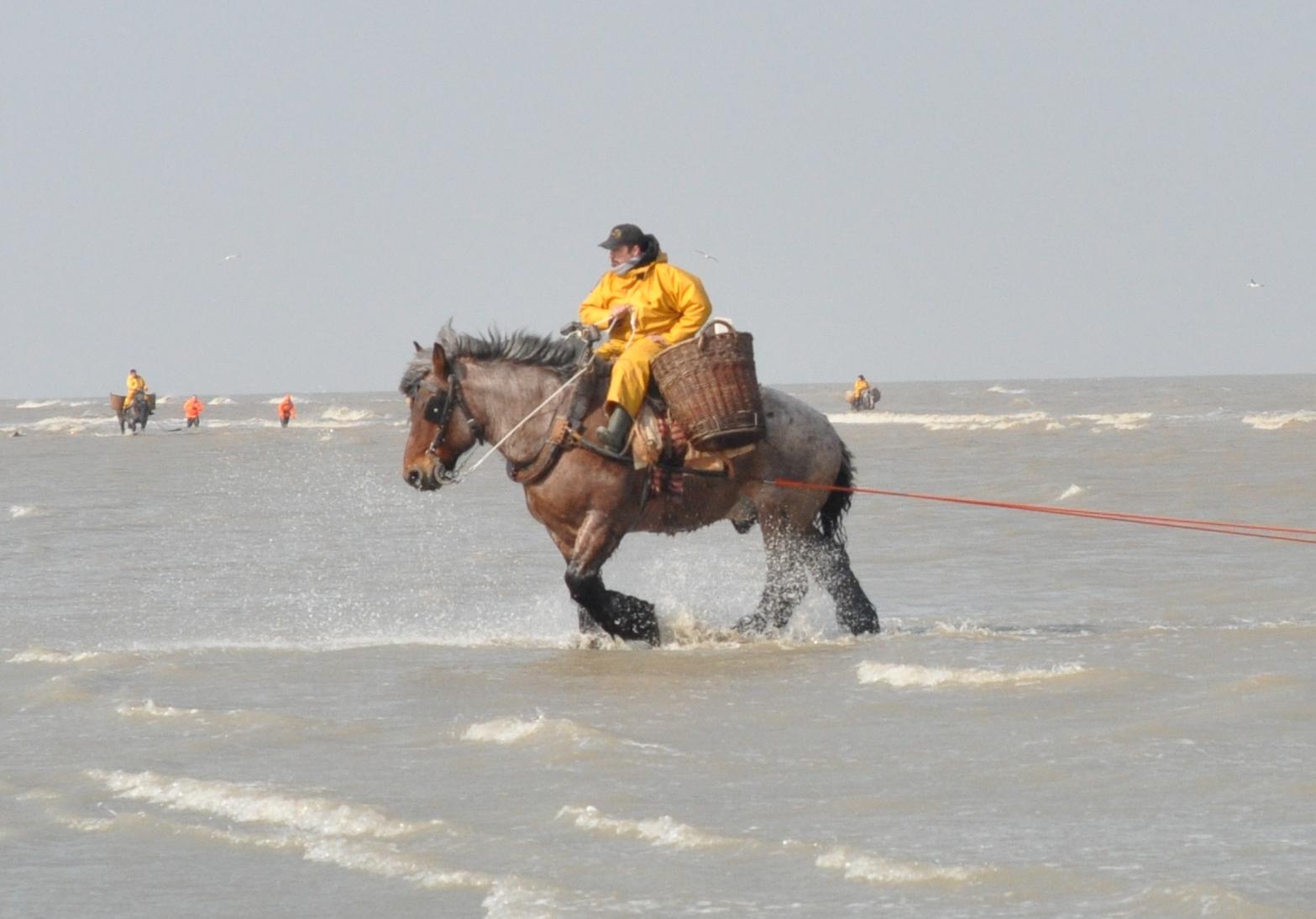 la puissance du cheval