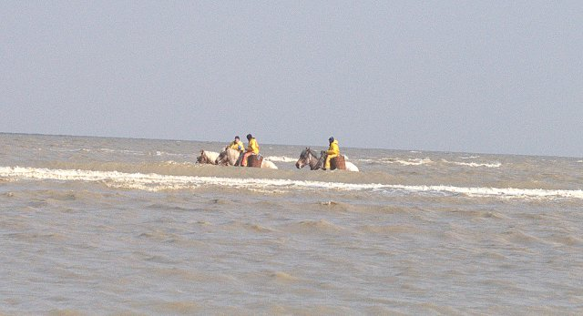 le cheval va loin en mer