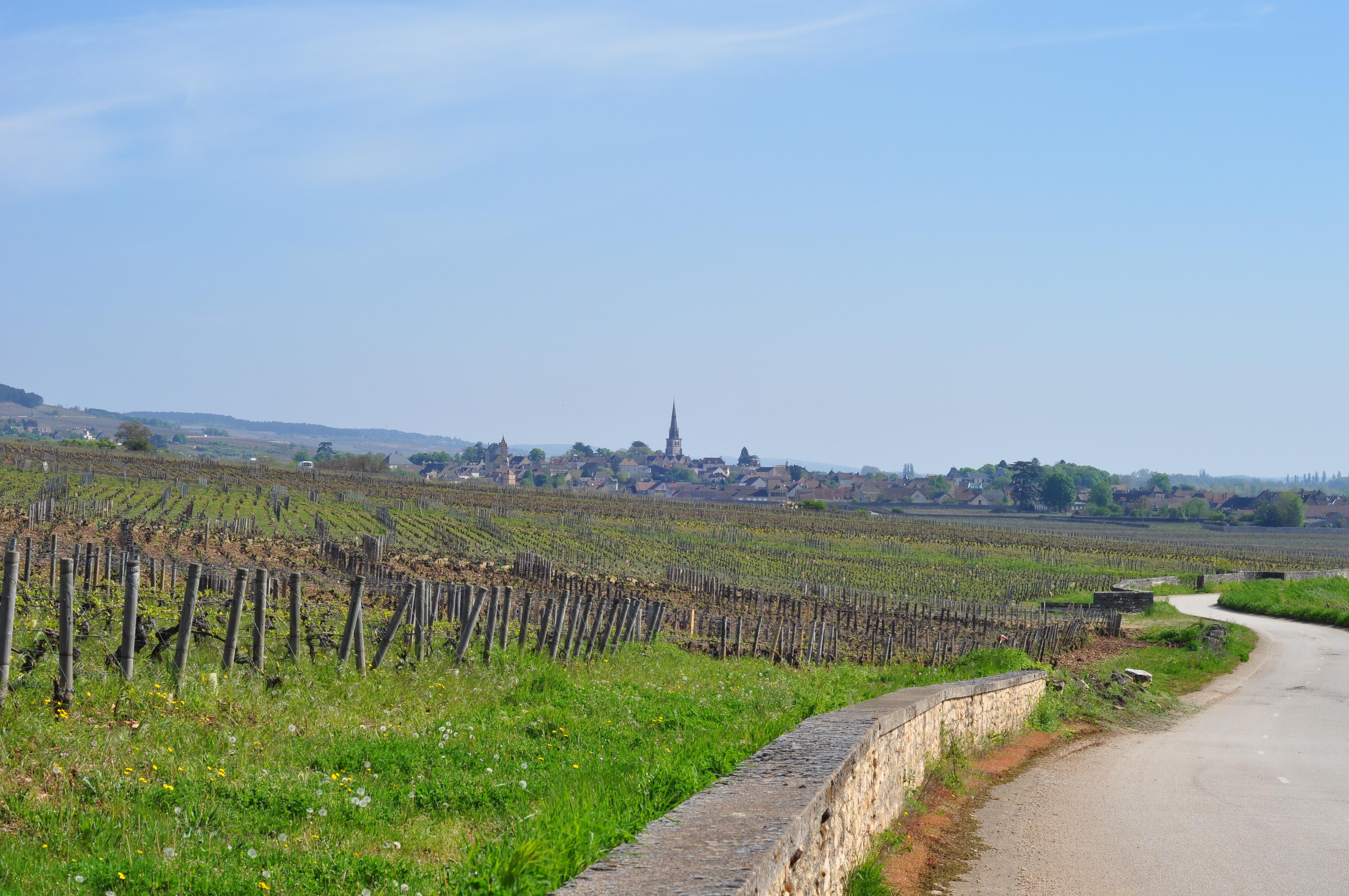 Au loin, Meursault.