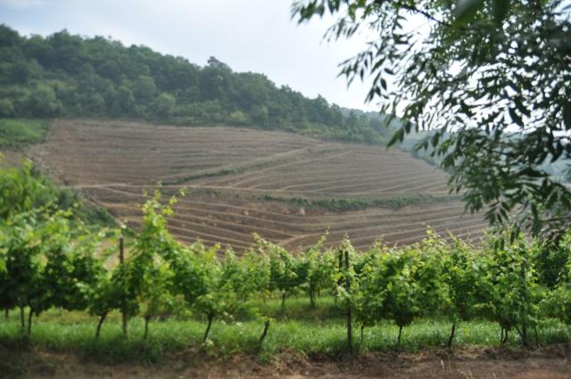 Préparation du sol avant plantation, ici dans l'Irouléguy
