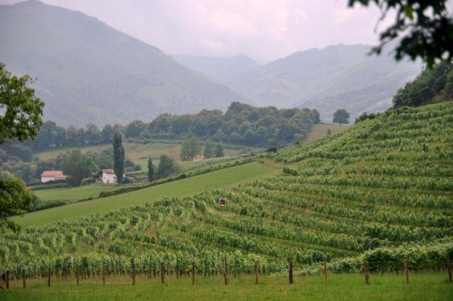 Travail dans une vigne mécanisée, toujours dans l'Irouléguy, où le rang double est roi.